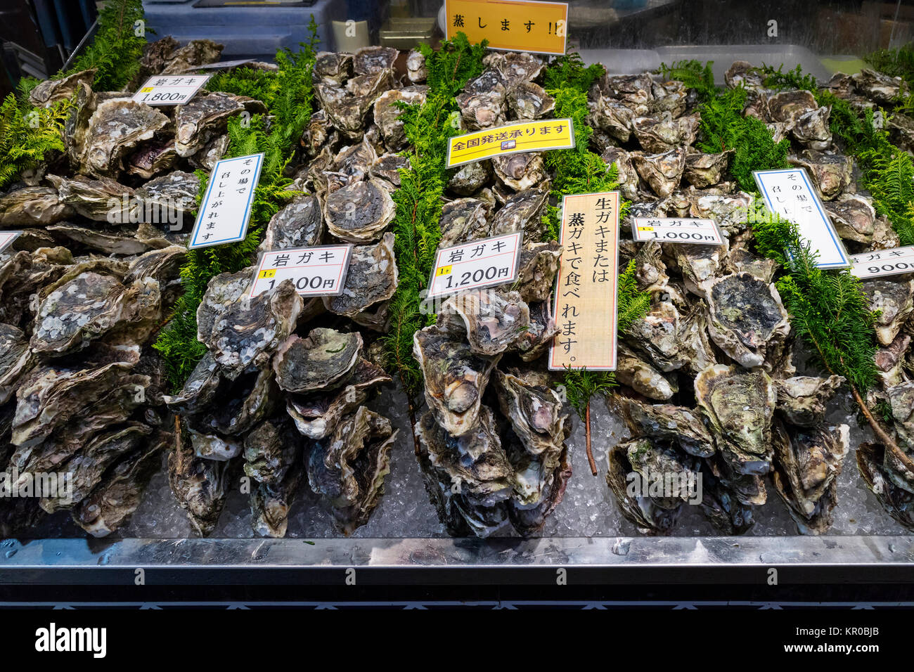 Kanazawa - Japan, June 8, 2017: Fresh raw oysters and price tags at the Omicho Market - Stock Image