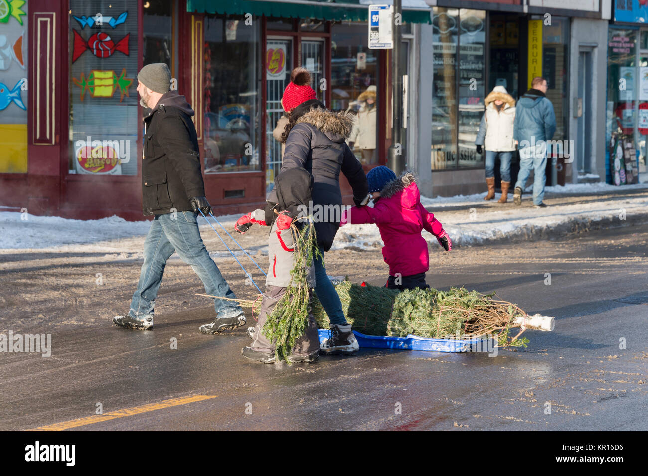 Montreal, Canada - 16 December 2017: Family pulling the christmas tree on a sledge - Stock Image