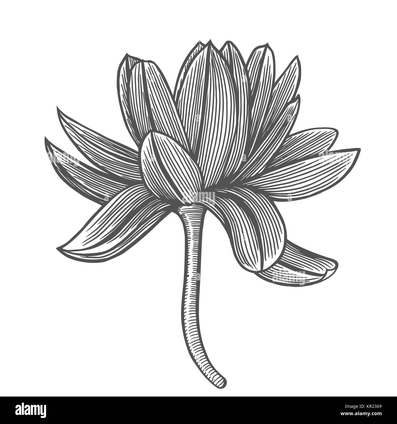 Lotus Flower Top View Line Pattern Vector Artwork Coloring Book