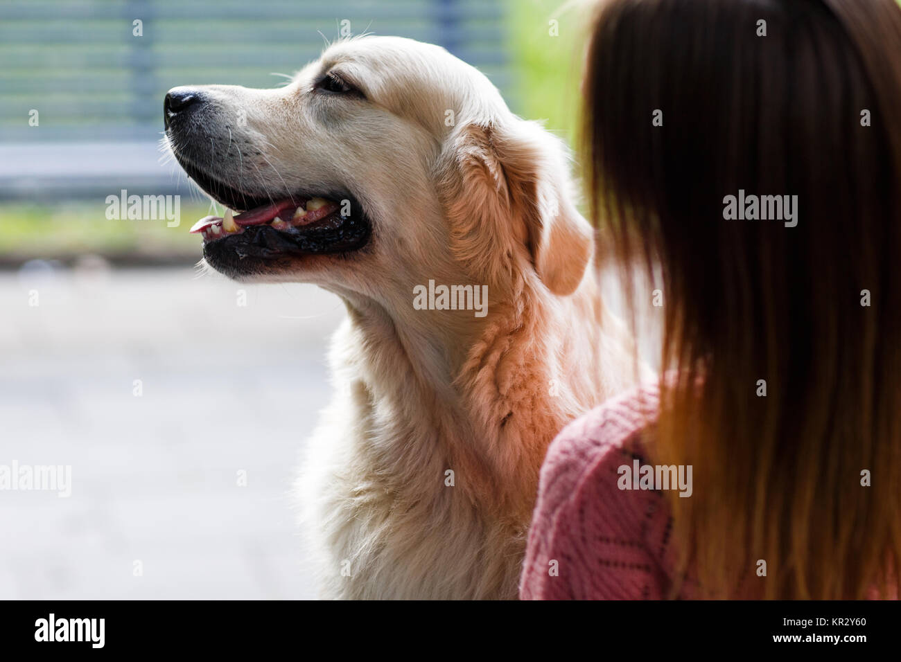 Image from back of woman with labrador - Stock Image