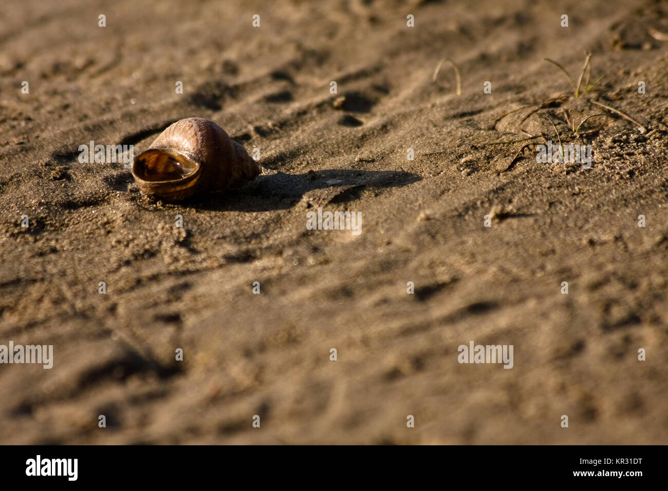 empty shell on send on a beach - Stock Image
