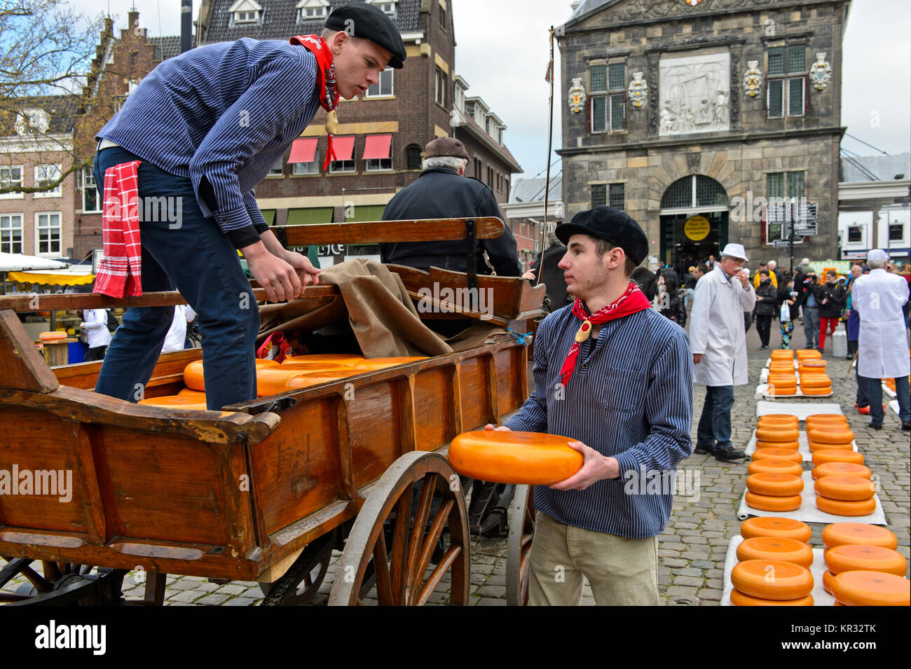 Dutch cheese boys loading Gouda cheese truckles at the cheese market, Gouda, Netherlands - Stock Image