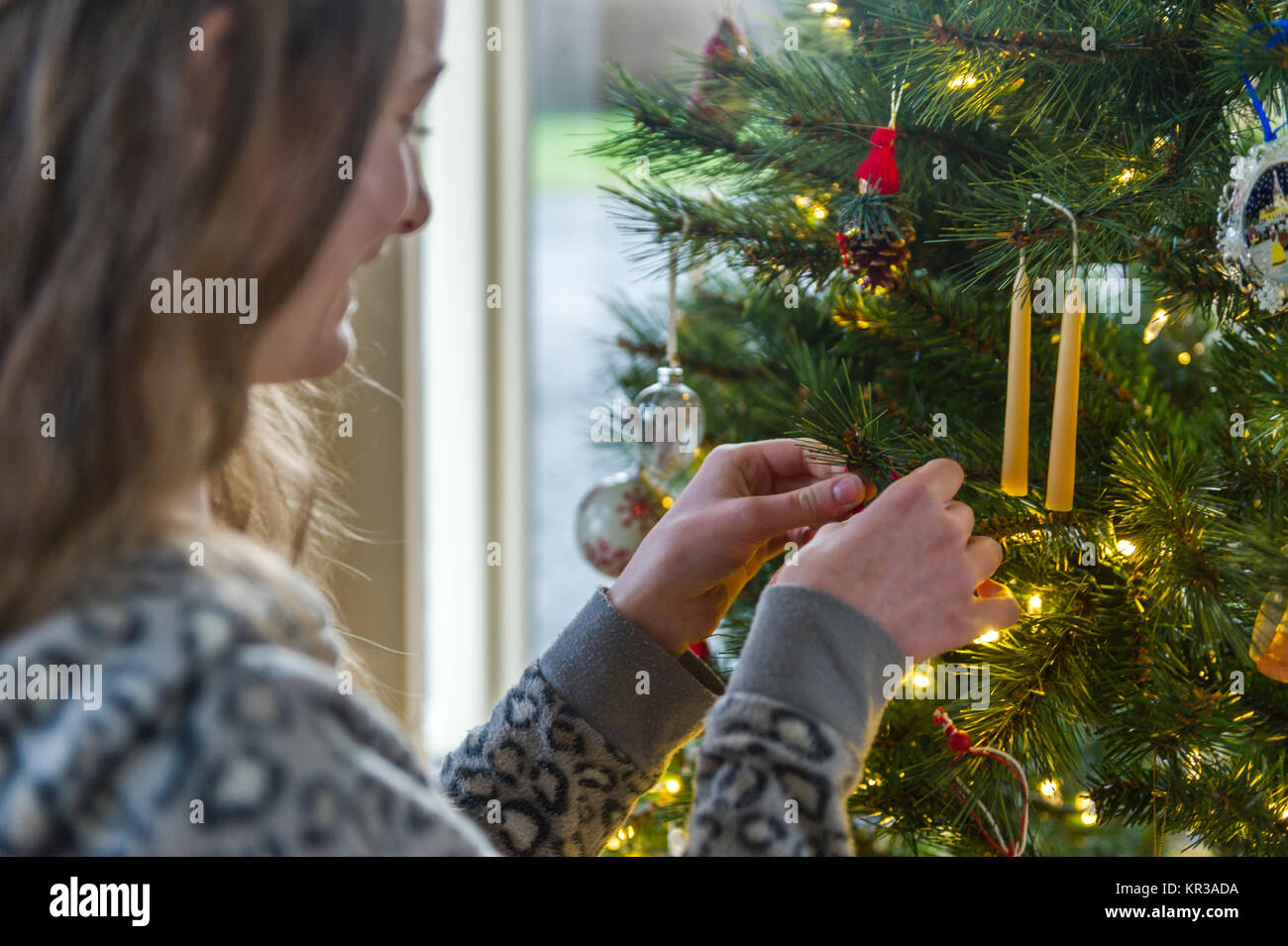 Close up of teenager decorating a Christmas Tree with illuminated lights. - Stock Image