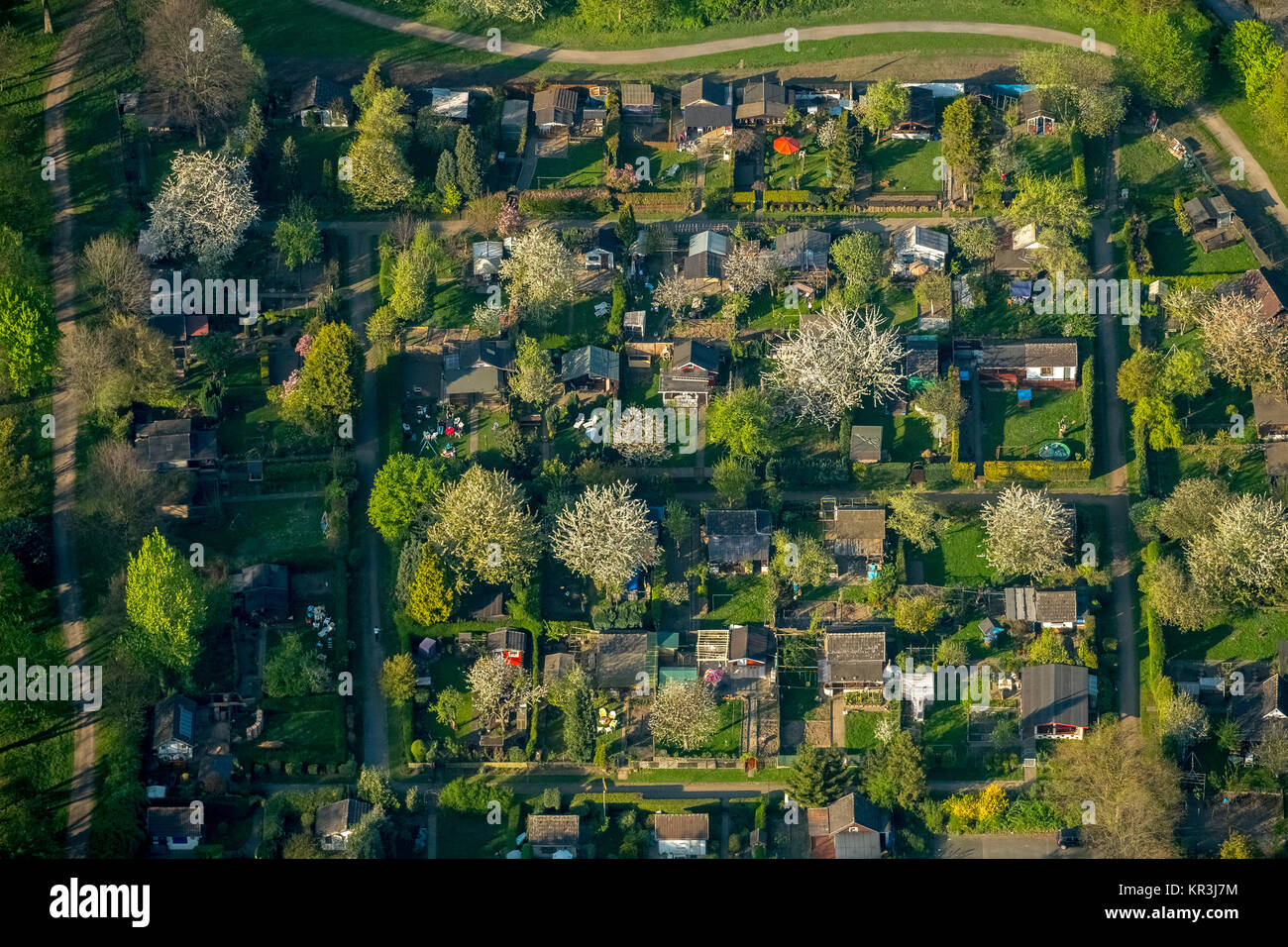 Allotment garden Nauheimer Straße, Duisburg-Neumühl, flowering trees, allotment garden, allotments, garden - Stock Image