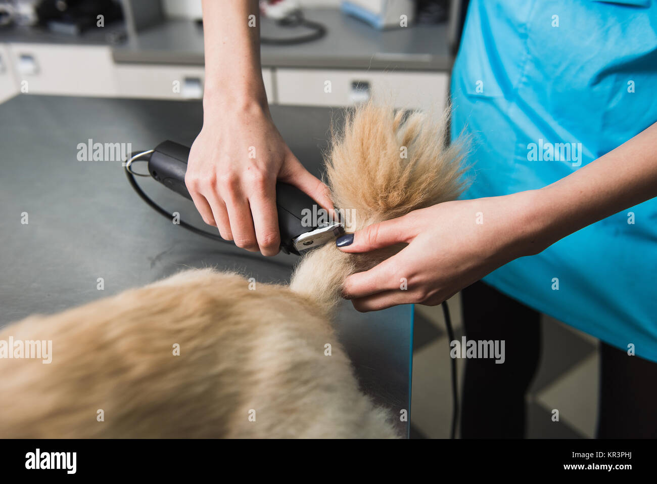 Cute Little Dog Groomer Salon Stock Photos Cute Little Dog Groomer