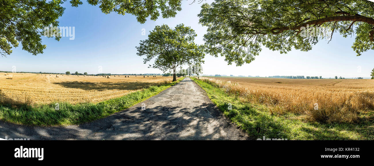 alley with old oak trees in Usedom - Stock Image