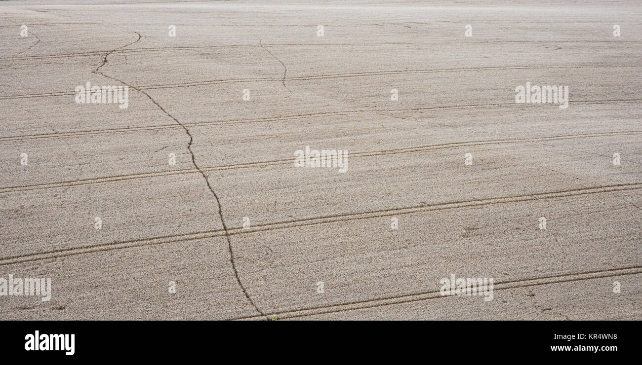A footpath forms a wobbly line through a field of wheat crop with otherwise regimented tractor wheel lines in the - Stock Image