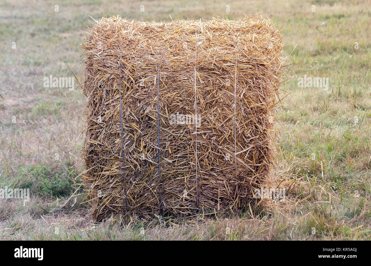 A bale of straw on a field after harvest. Stock Photo