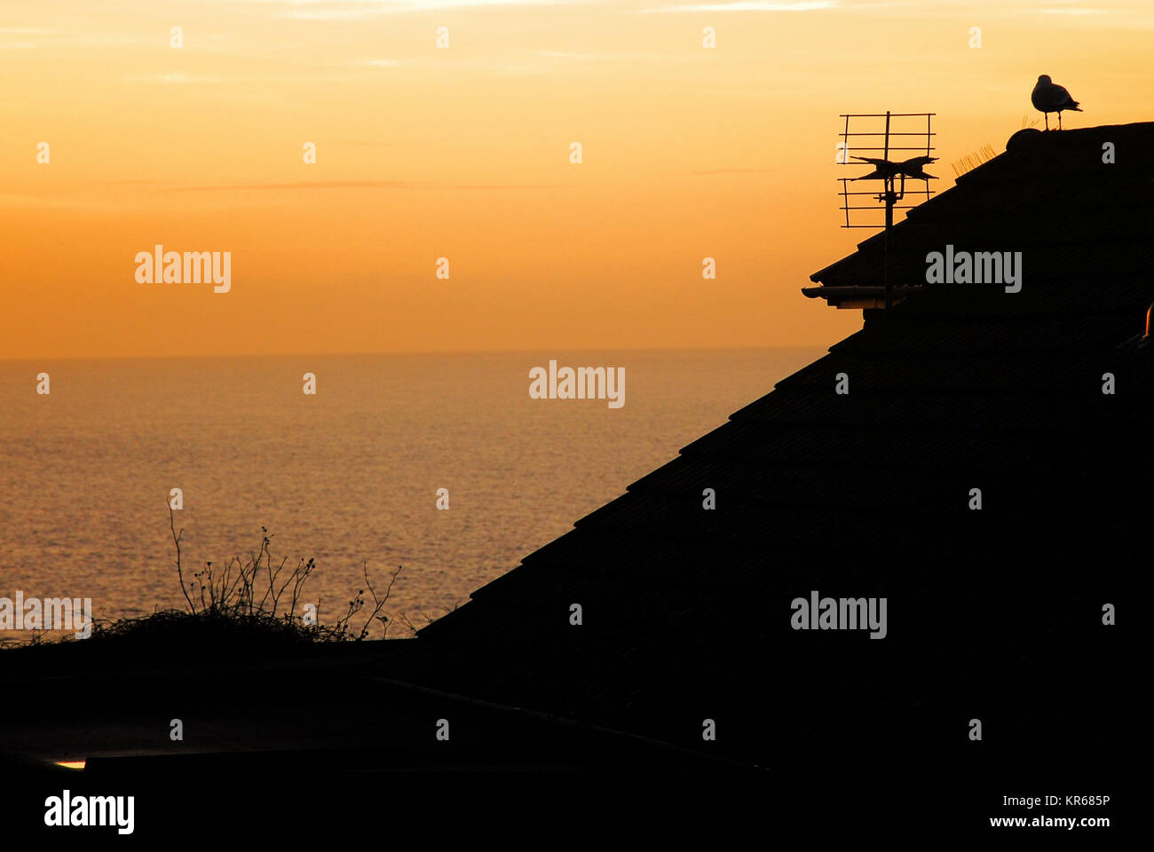 Portland, Dorset. 19th December 2017 - A seagull roosts on a Portland rooftop as the sun sets over Lyme Bay Credit: - Stock Image