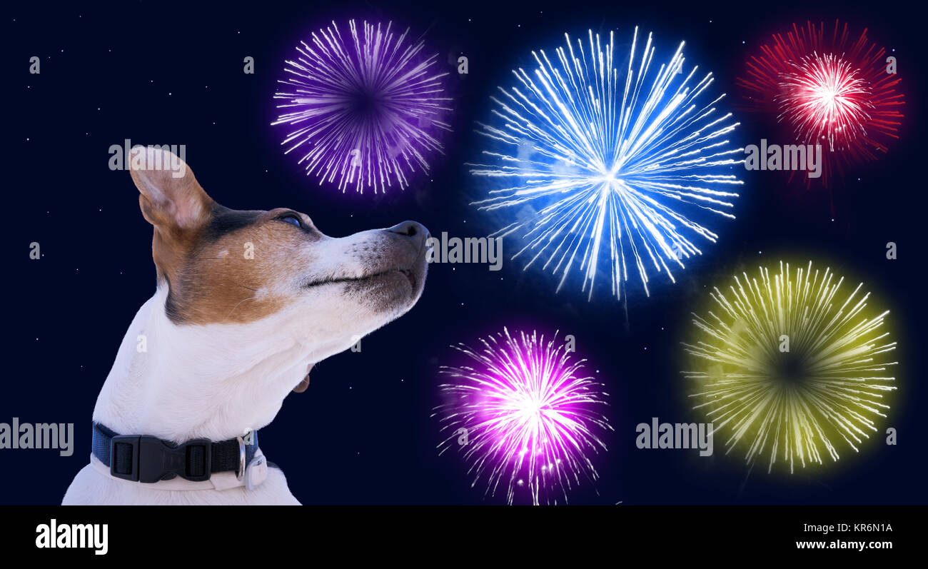 Safety of pets during fireworks concept - Stock Image