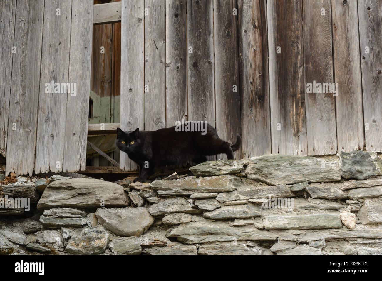 black cat - old woodshed Stock Photo