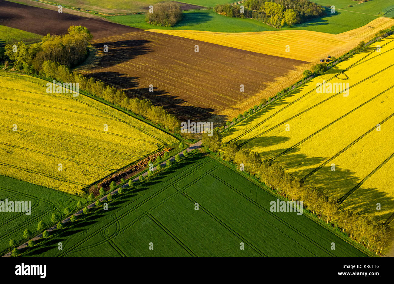 Road Junction, Avenue intersection with blooming rapeseed fields, Groß Roge, Mecklenburg Lake District, Mecklenburg - Stock Image