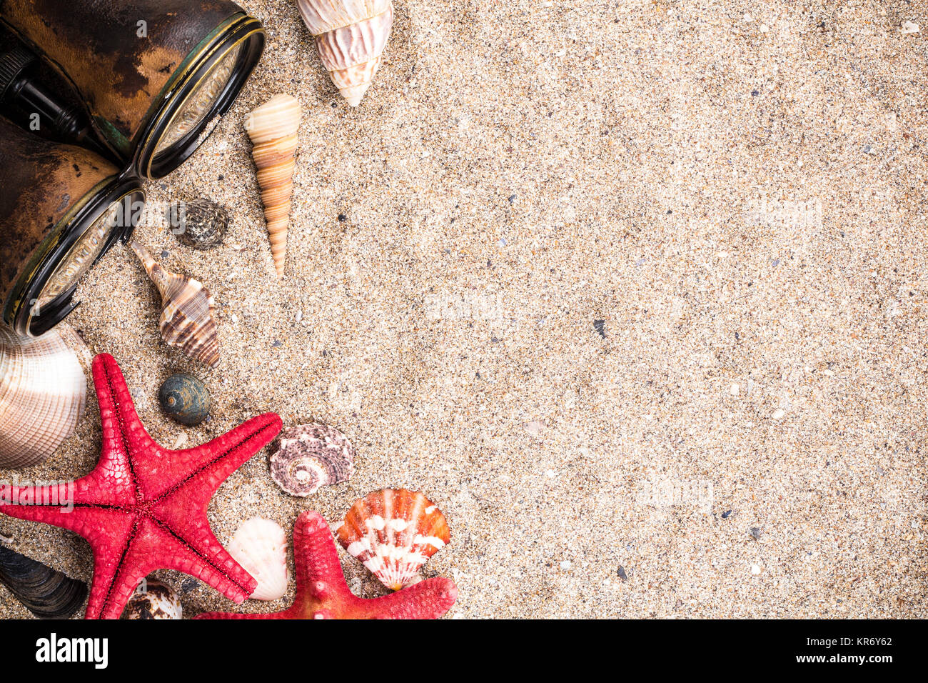 Sea Shells With Starfish Binocular Wallpaper