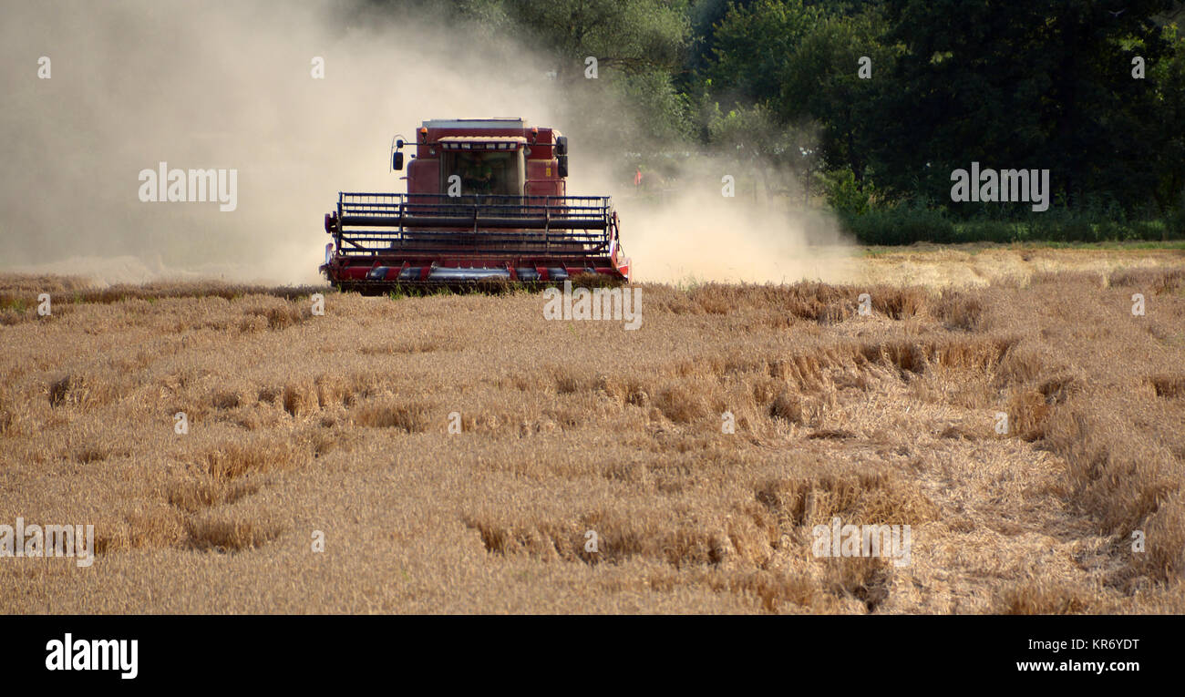 combine harvester in action - Stock Image