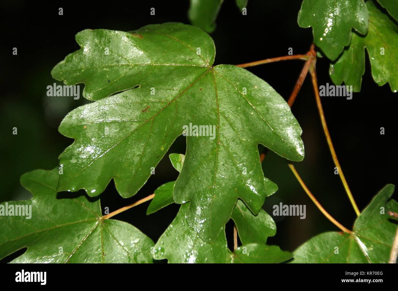 journal of hawthorn in the rain Stock Photo