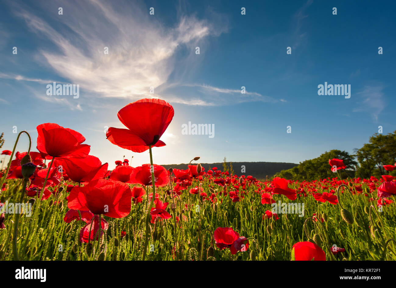 Sunburst Field Stock Photos & Sunburst Field Stock Images - Alamy