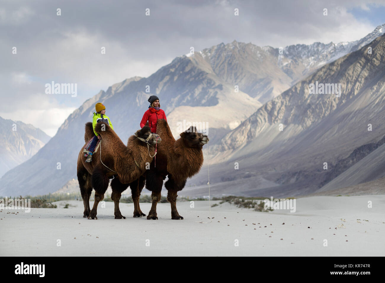 Mother and son riding double hump camels and crossing the desert in the Nubra valley, Ladakh, Jammu and Kashmir, - Stock Image