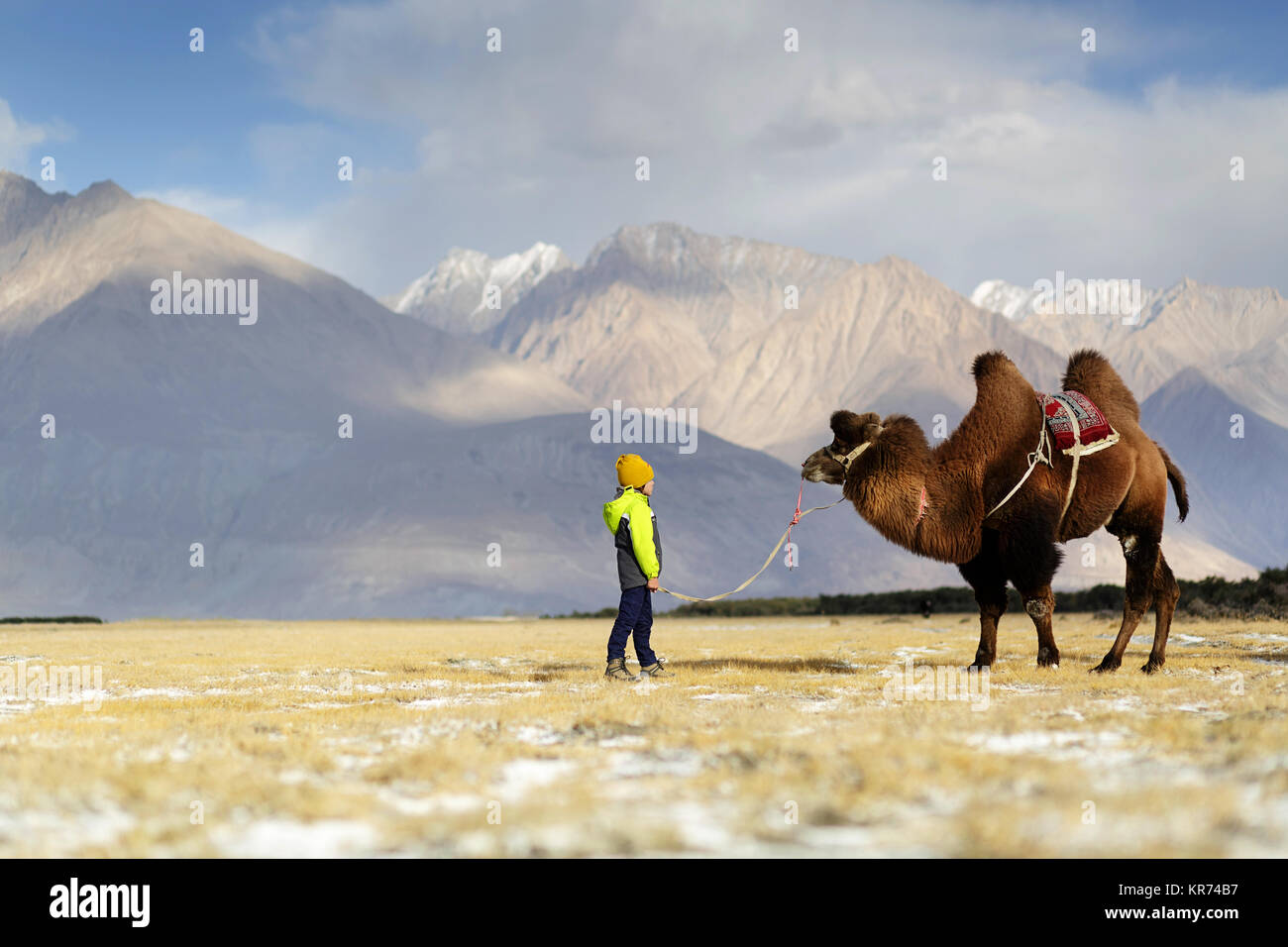 Young western boy riding double hump camel and crossing the desert in the Nubra valley, Ladakh, Jammu and Kashmir, - Stock Image