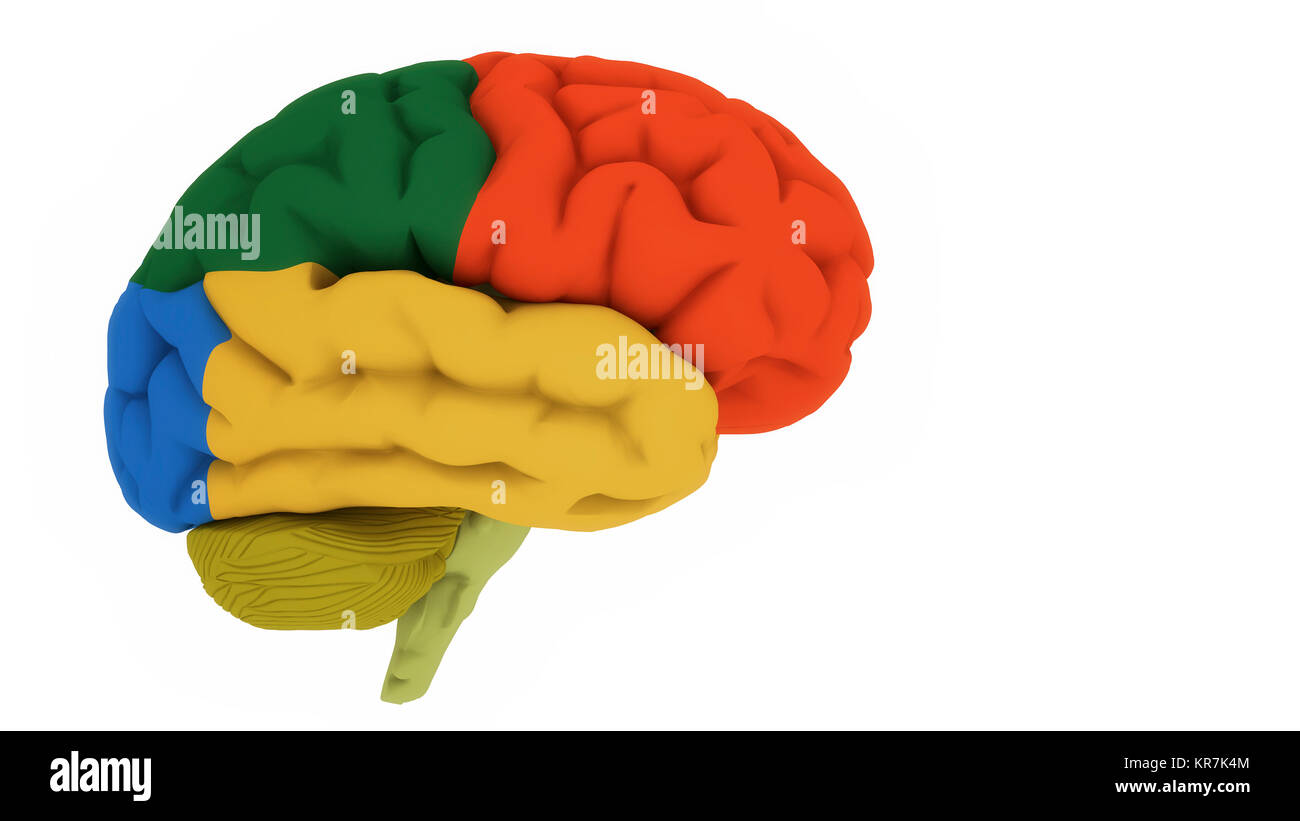 3d render. Brain colord areas - Stock Image