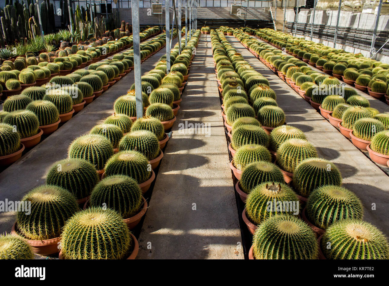 Cactus Nursery Stock Photos & Cactus Nursery Stock Images - Alamy