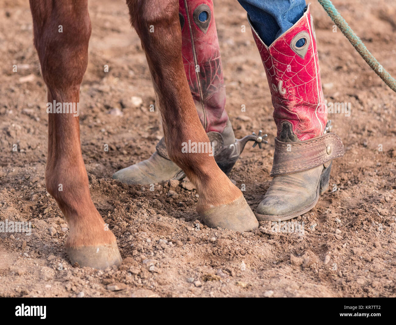 Closeup of Cowboy Boots and Horse Hooves - Stock Image