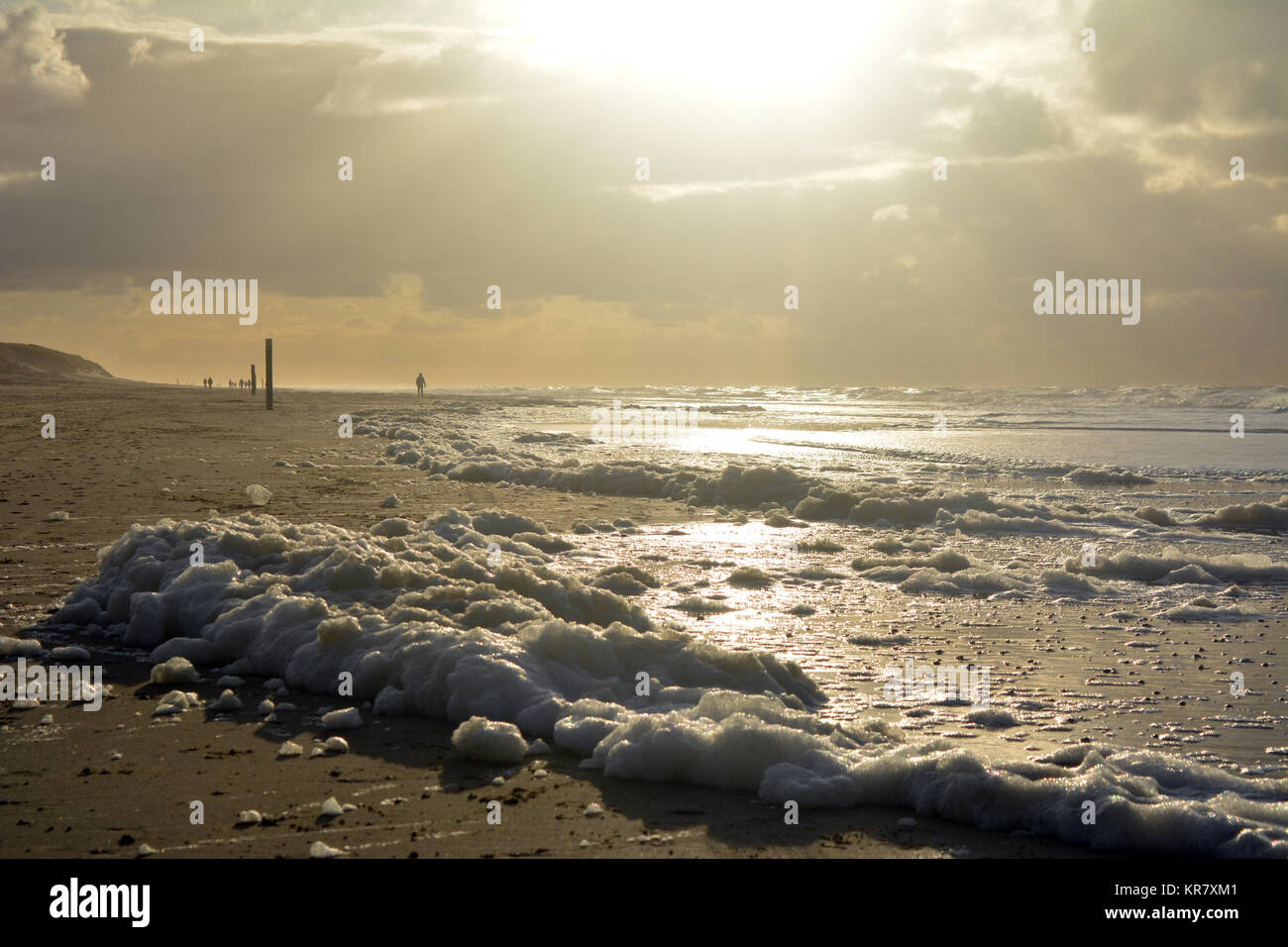 Froth on the beach at sunset on North sea, isle Texel, Netherlands Europe. Stock Photo