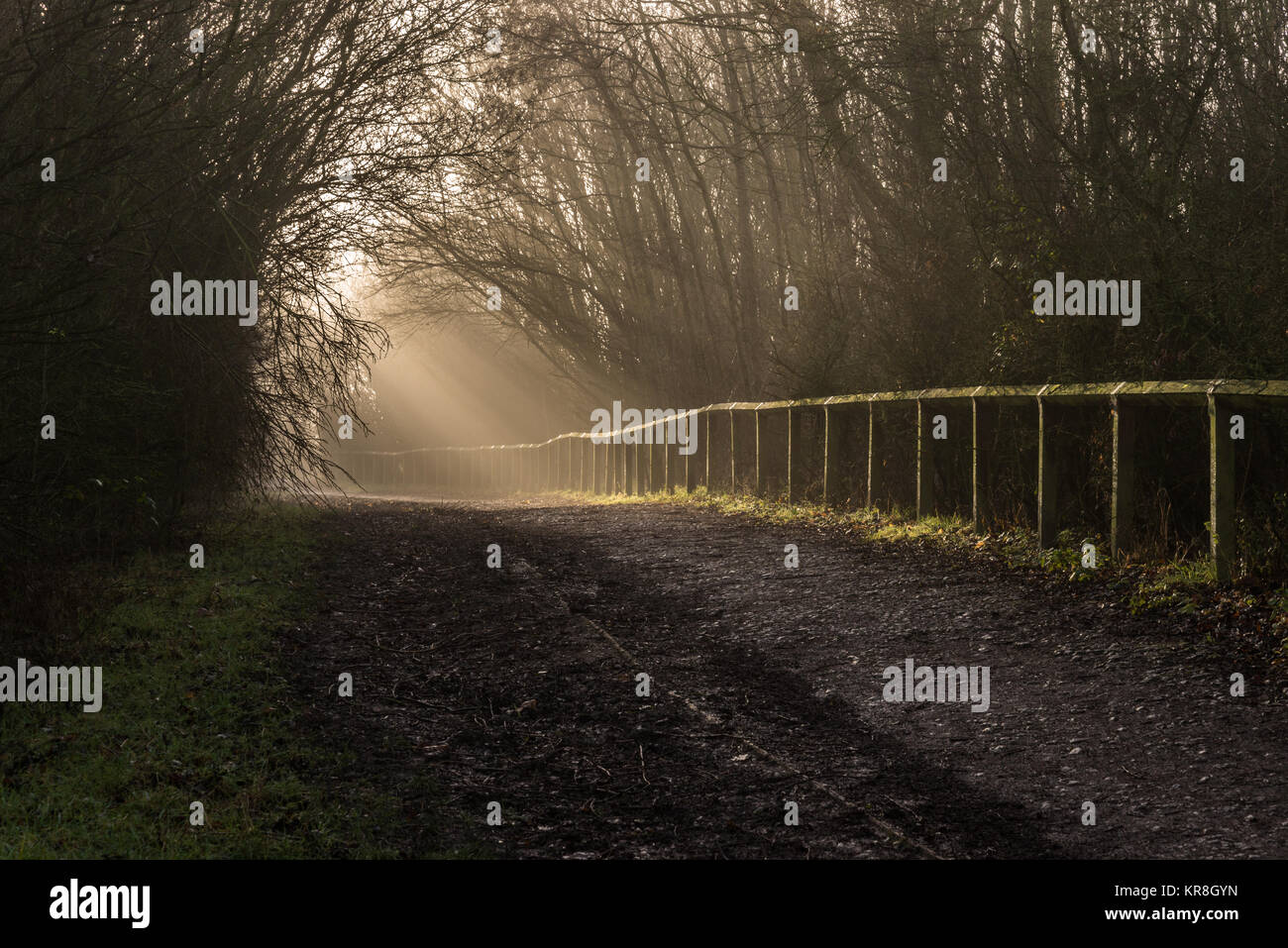 Early morning winter sun's rays through the trees and mist on a country walk in December, Blackpool, Lancashire, Stock Photo
