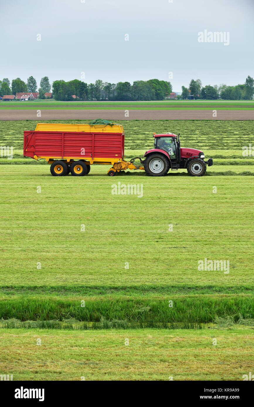 Tractor pulling a Forage wagon and collecting cutted hay silage into a self-loading silage wagon in a Dutch polder. - Stock Image