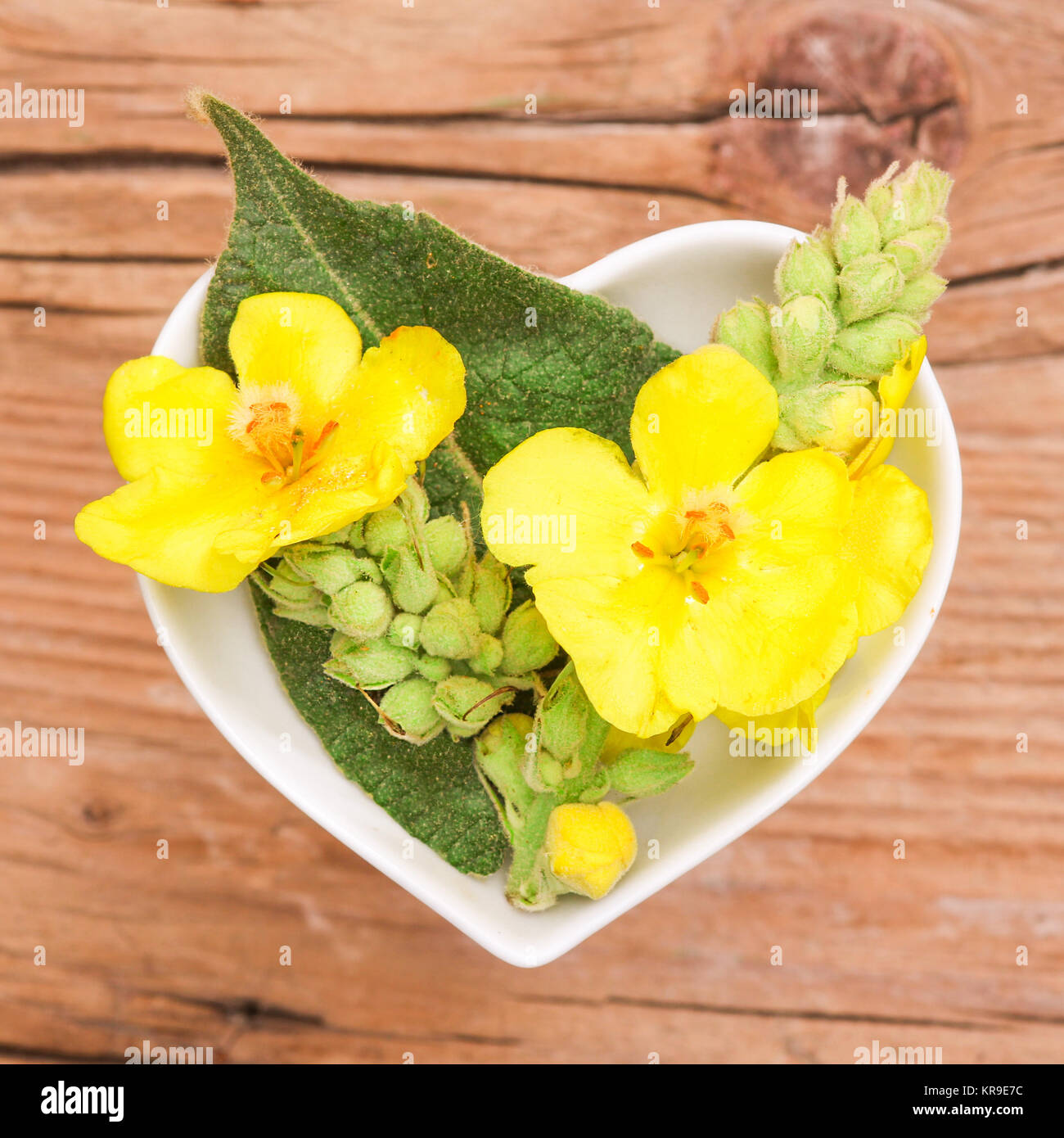homeopathy and cooking with herbs,mullein - Stock Image
