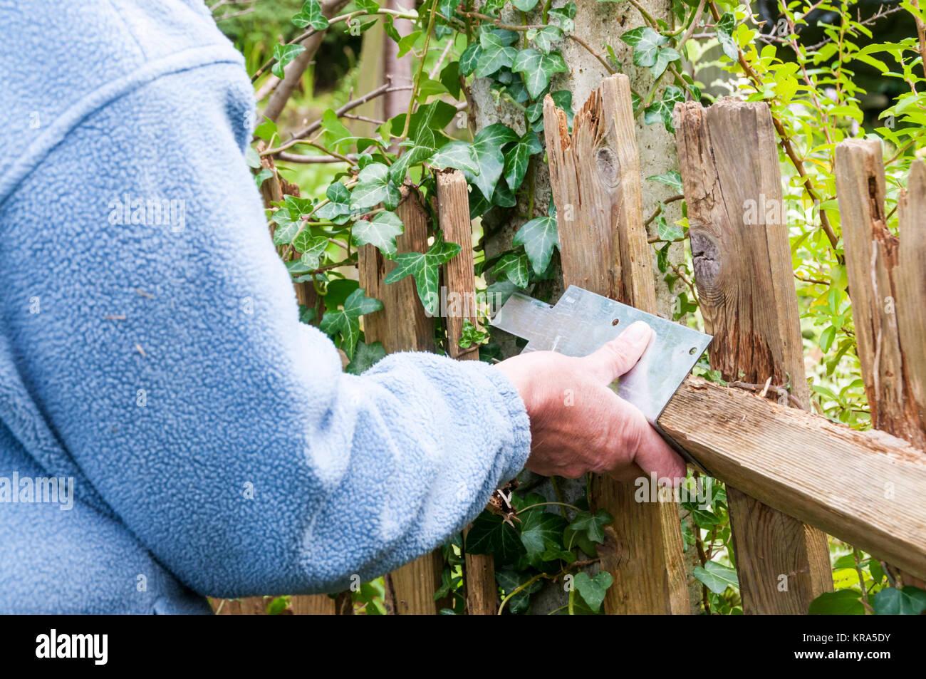 Mending a wooden garden fence. Stock Photo