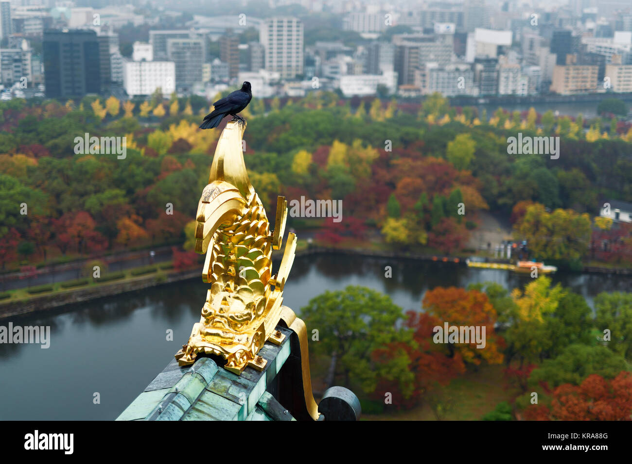 Raven sitting on roof top gold decor of Osaka Castle with aerial autumn city scenery of Osaka and the Castle Park - Stock Image