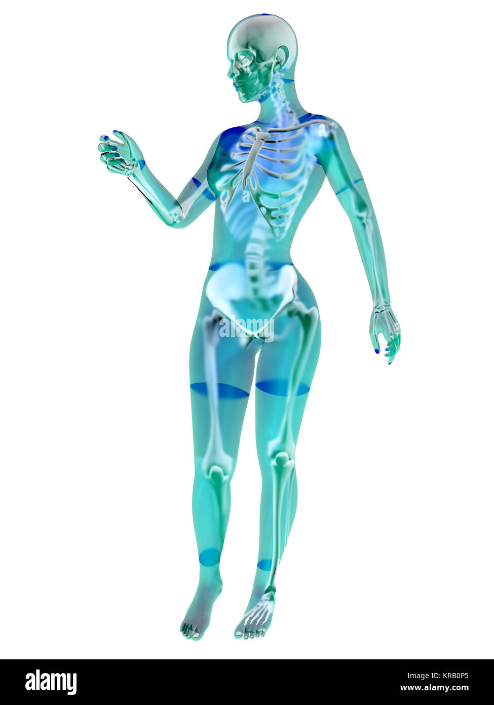 3d Render Medical Illustration Female Stock Photos 3d Render
