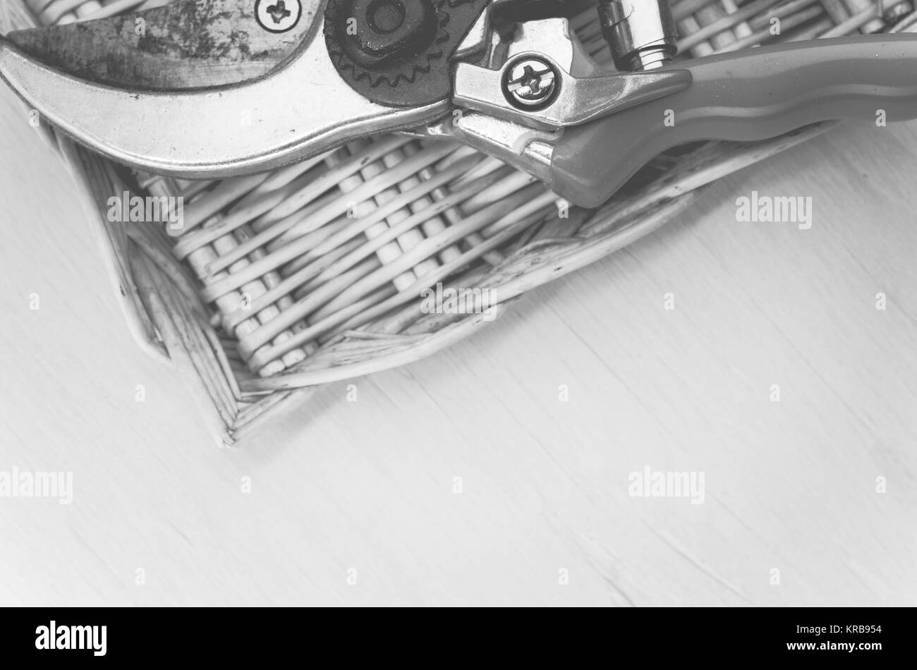 pair of worn garden scissors in a wicker box  close up on a bright tint wood surface - Stock Image