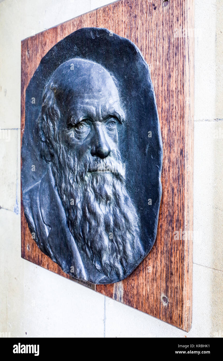 Charles Darwin sculpture / portrait by Horace Montford in Christ's College, part of the University of Cambridge - Stock Image