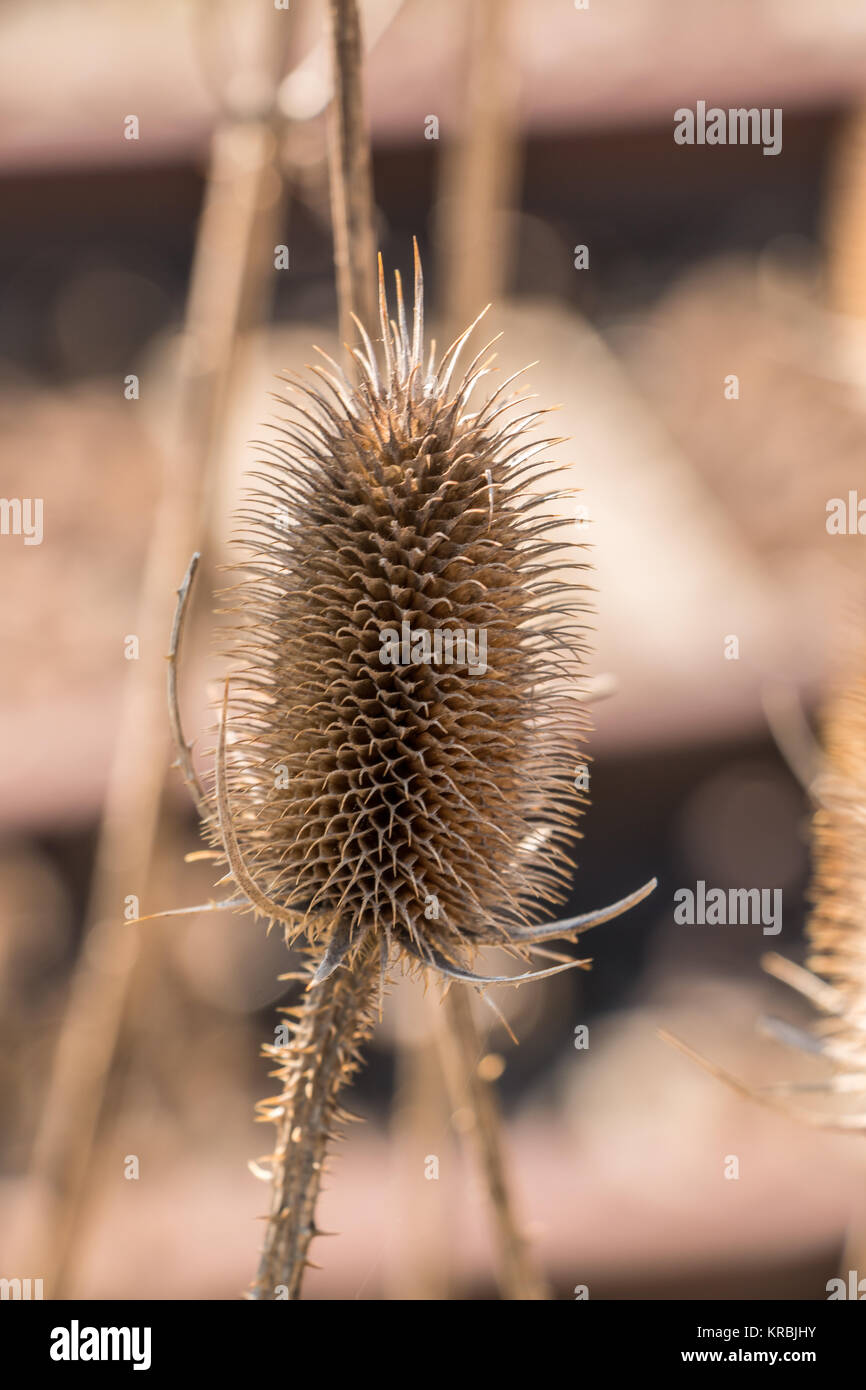 Dry brown thistle near by the rails Stock Photo