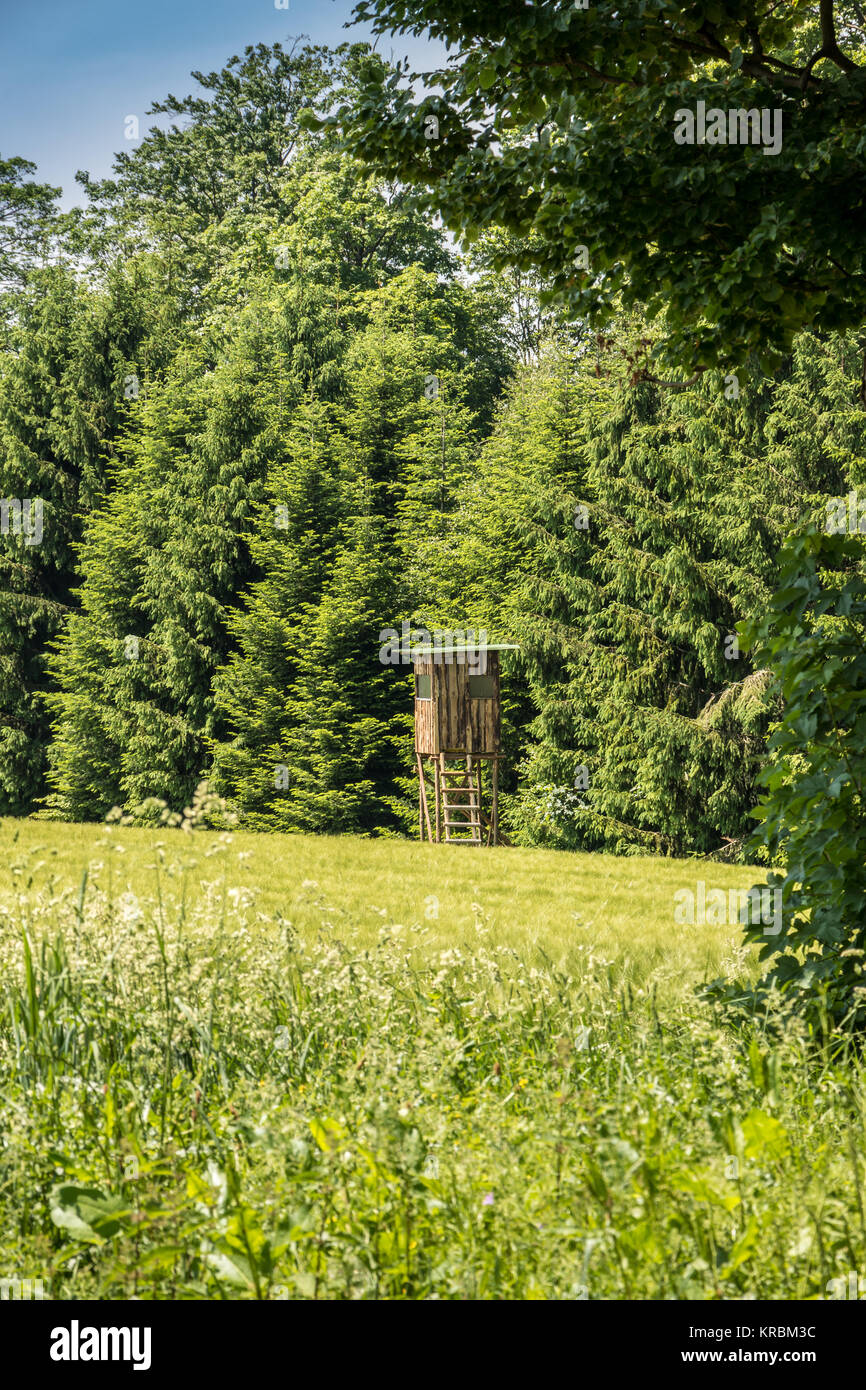 Raised hide on the edge of the forest - Stock Image