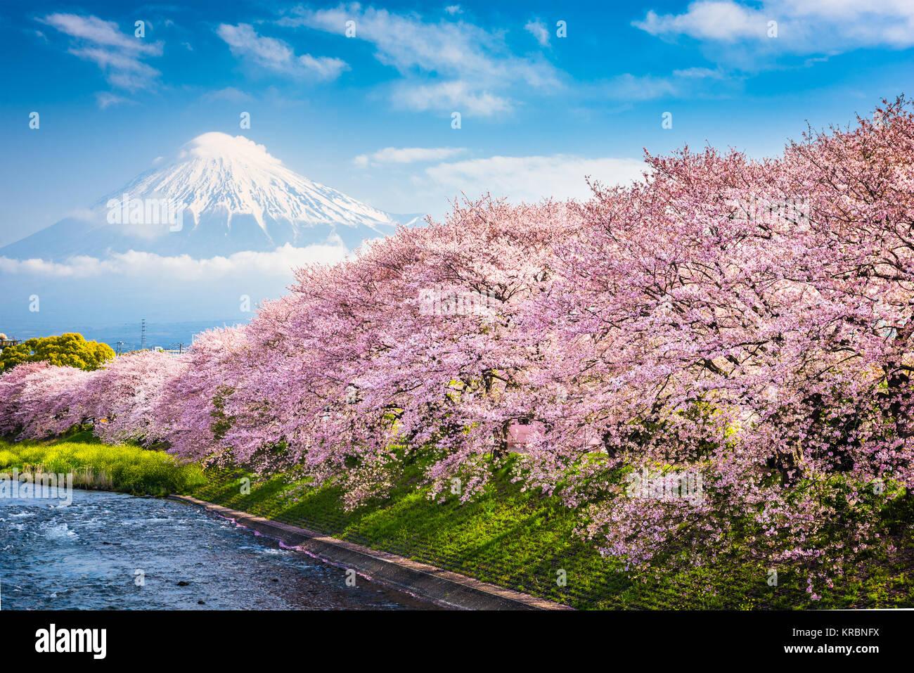 Mt. Fuji, Japan spring landscape. - Stock Image