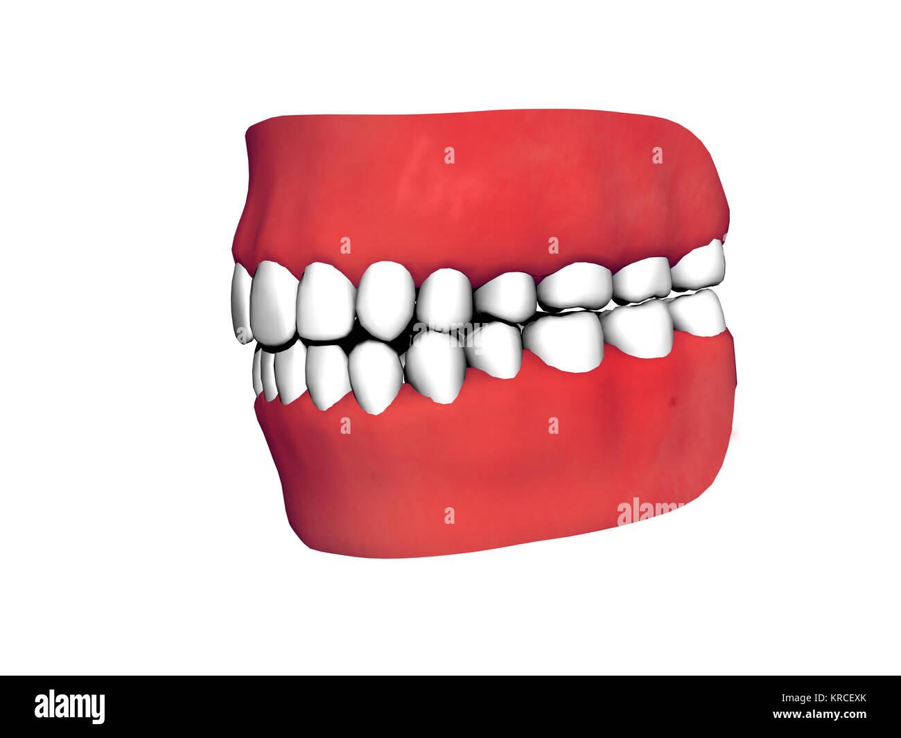 dentition free - Stock Image