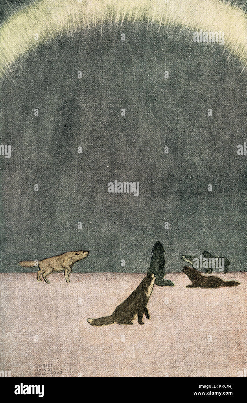 The song of the huskies:  howling under the Aurora  Borealis.        Date: First published: 1903 - Stock Image