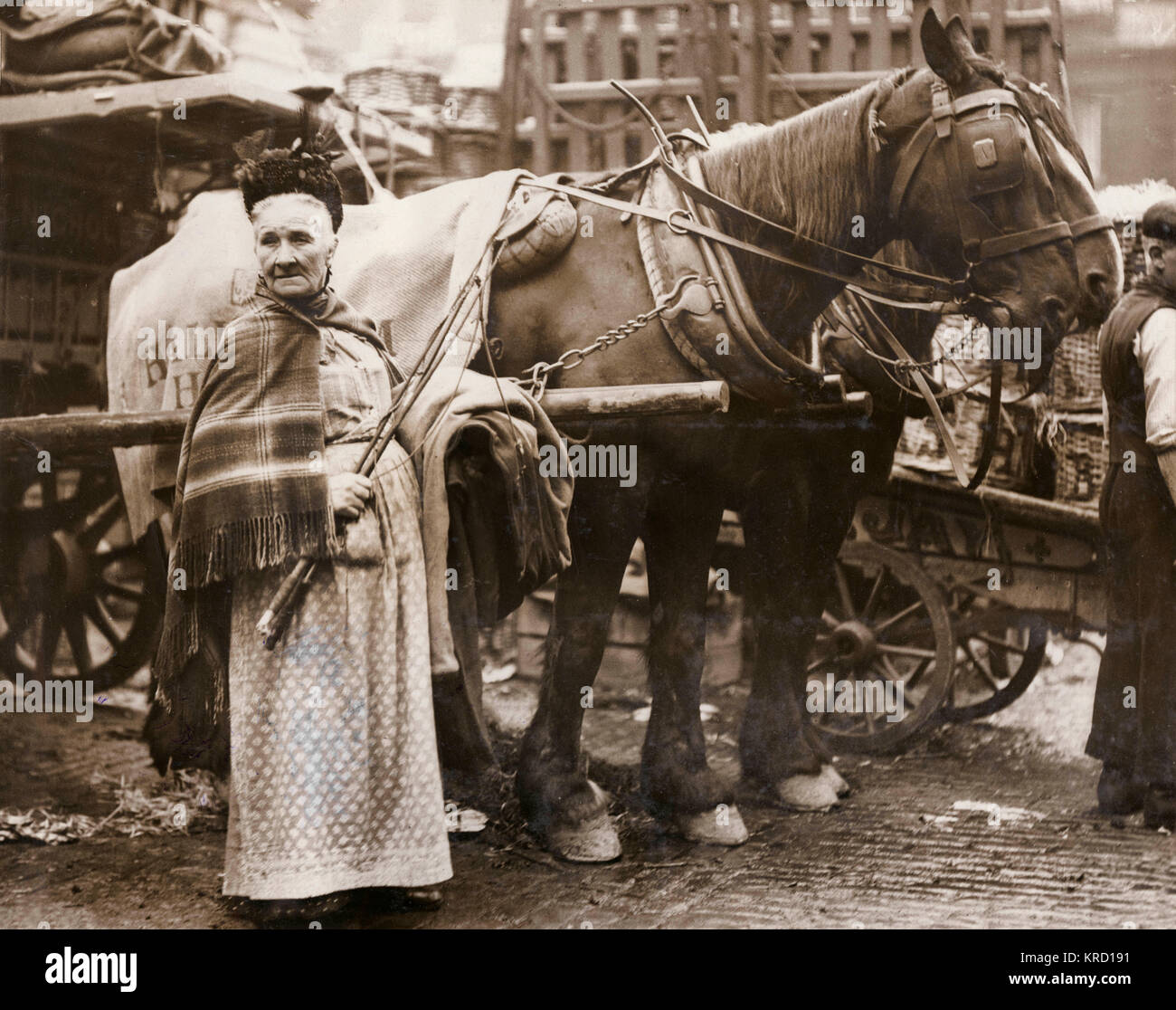 Mrs Sullivan, or 'Auntie of the Garden', a famous character in Covent Garden Market who earned her living - Stock Image