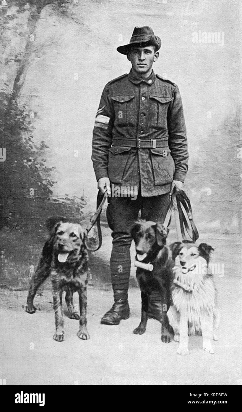 Keeper Coull with three of his charges - messenger dogs used by the British Army during the First World War to carry - Stock Image