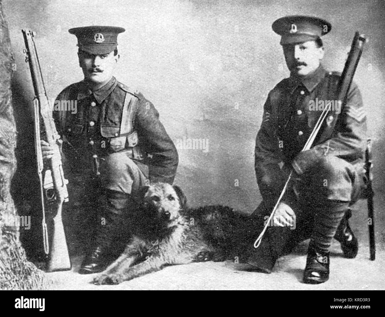 A sentry dog, which went out with the British Expeditionary Force in 1914.  It was killed on the Aisne.       Date: - Stock Image