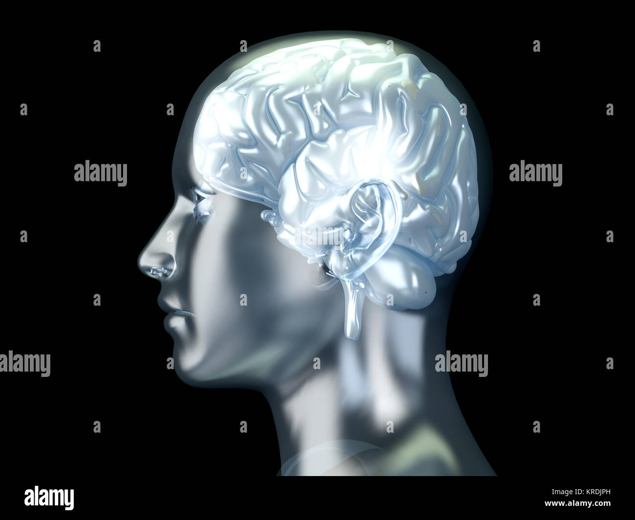 The Human Brain. 3D rendered anatomical illustration. Stock Photo