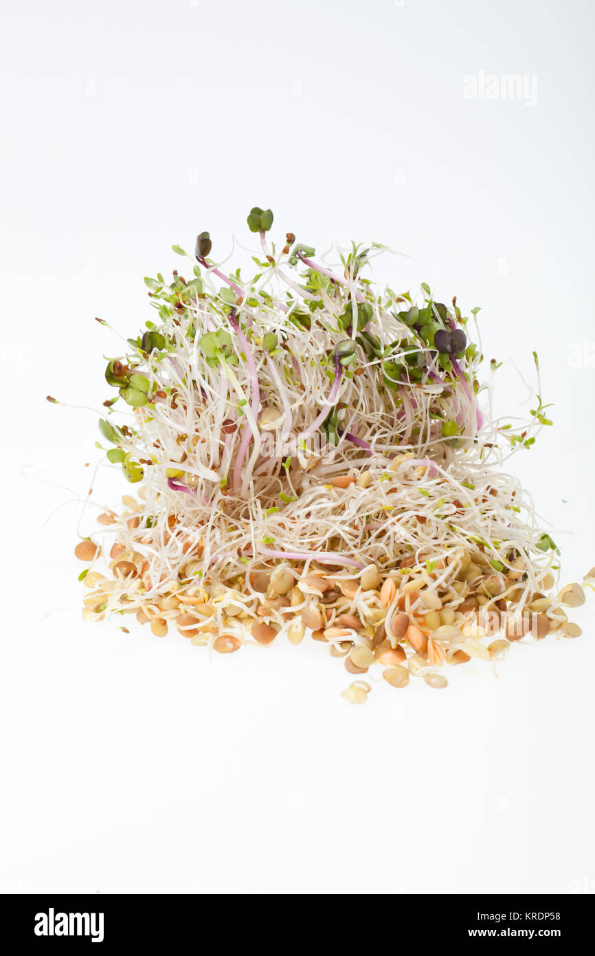 The healthy diet. Fresh sprouts isolated on white background - Stock Image