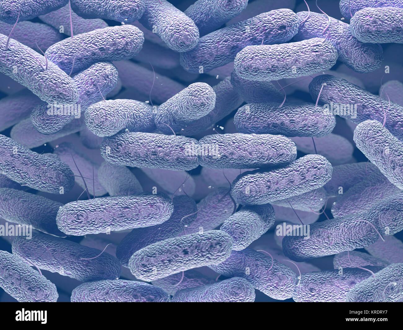 Enterobacteriaceae Bacteria Family - Stock Image