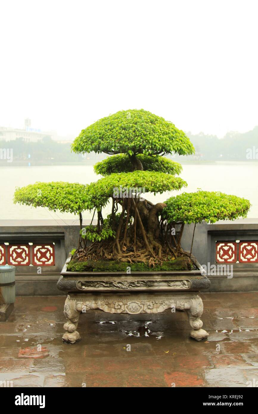 Ngoc Son Temple Bonsai, Hanoi, Vietnam - Stock Image