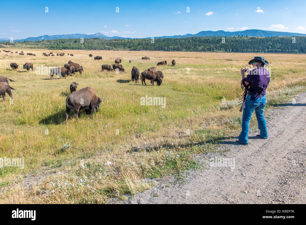 Woman in a cowboy hat uses cellphone to take photo of a herd of