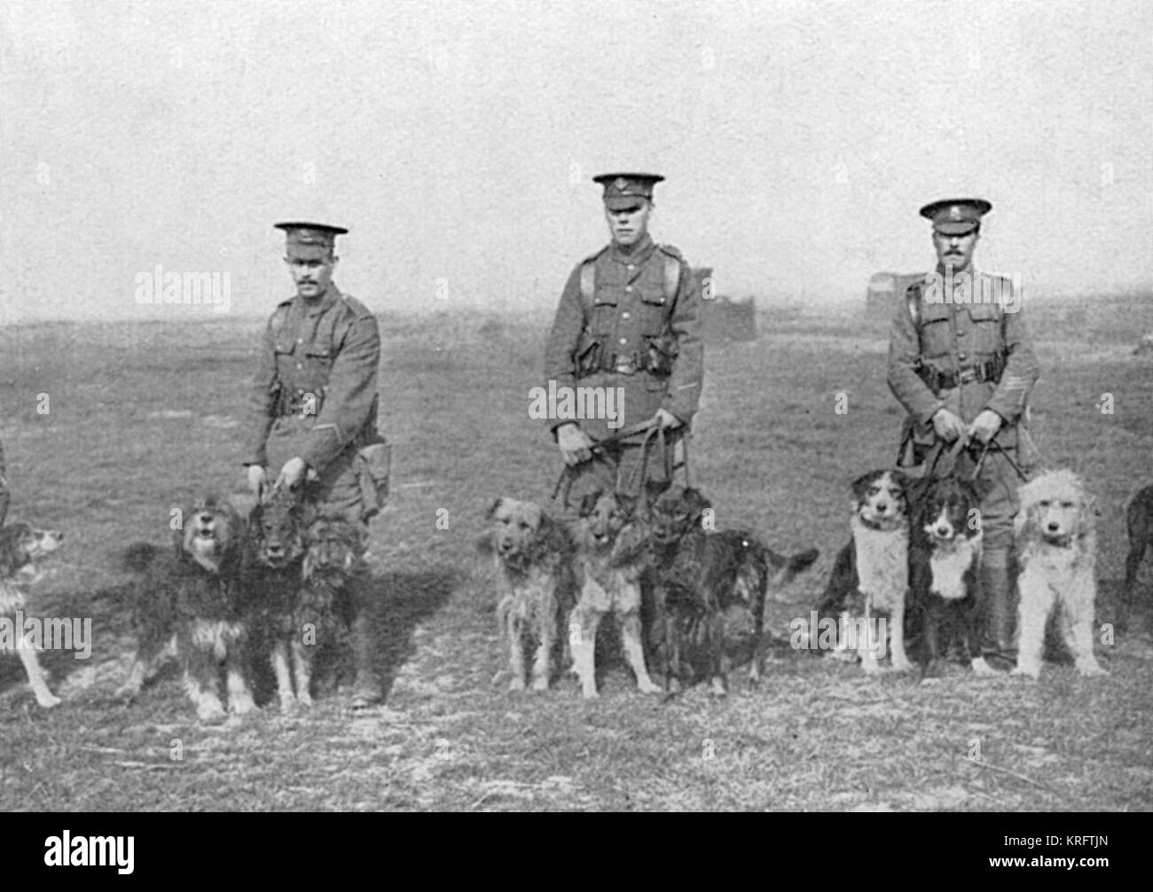 Keepers and their  canine  charges at the British War Dog Training School, where dogs were trained to act as messengers - Stock Image
