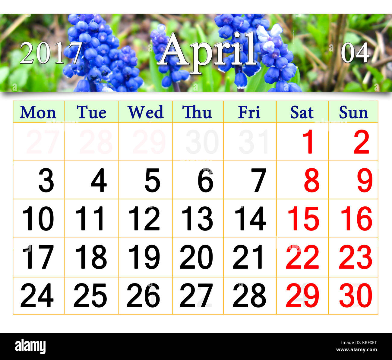 calendar for April of 2017 with muscari - Stock Image