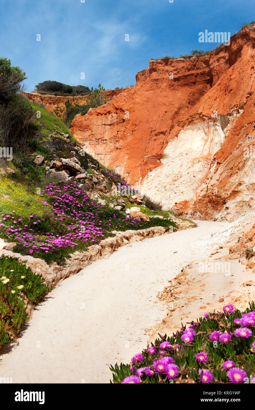 Coastline at Ohos de Aqua near Albufeira, Algarve, Portugal in spring with Hottentot Fig (Carpobrotus edulis) flowers Stock Photo